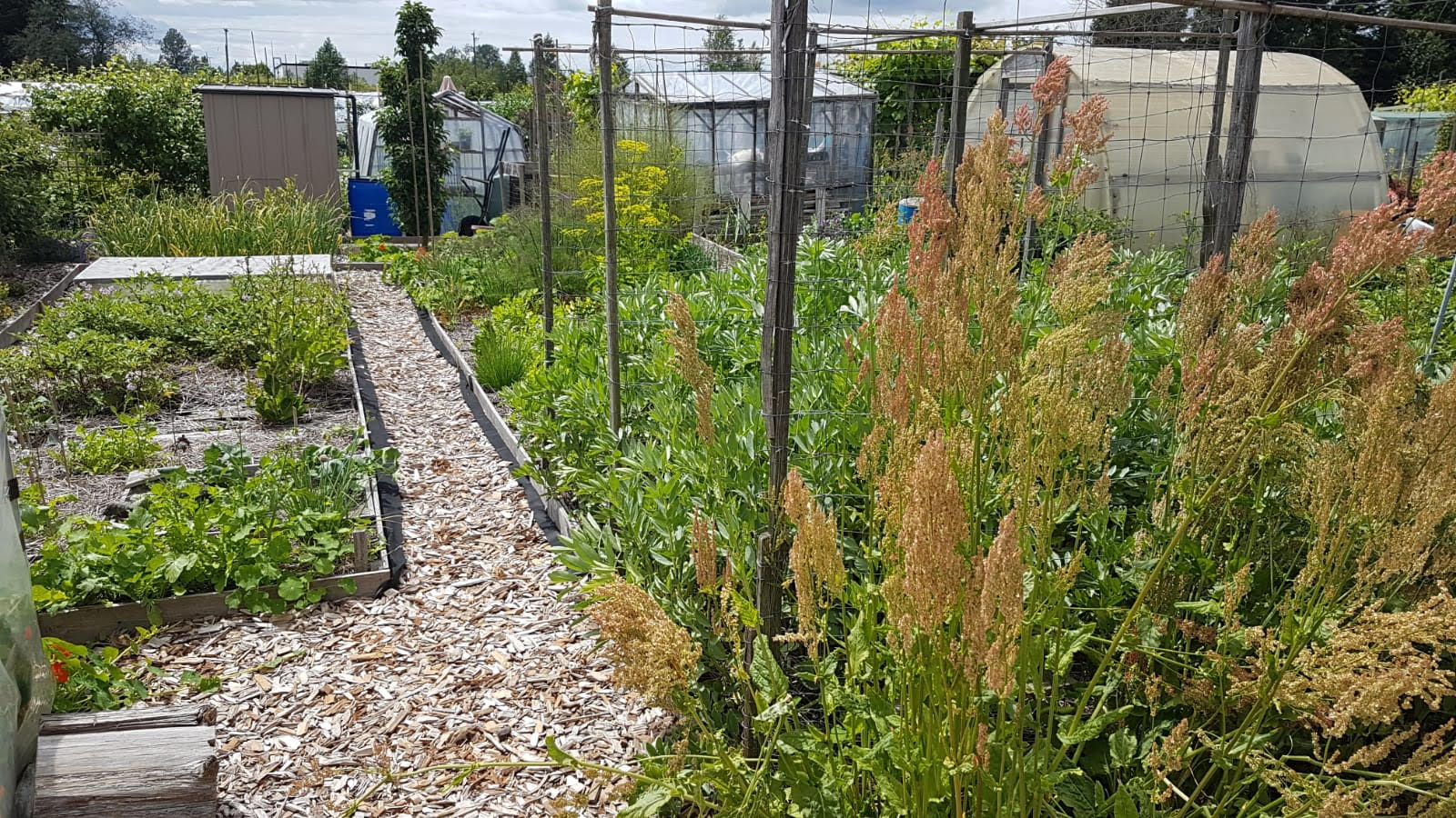 Irrigate Veggie Gardens